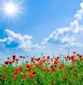 Vitamin D 3 Mangel - auch im Sommer? - Mohnblumen