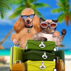Sprechzeiten - Hund_mit_Koffer